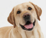 Florham Park Dog Licnese