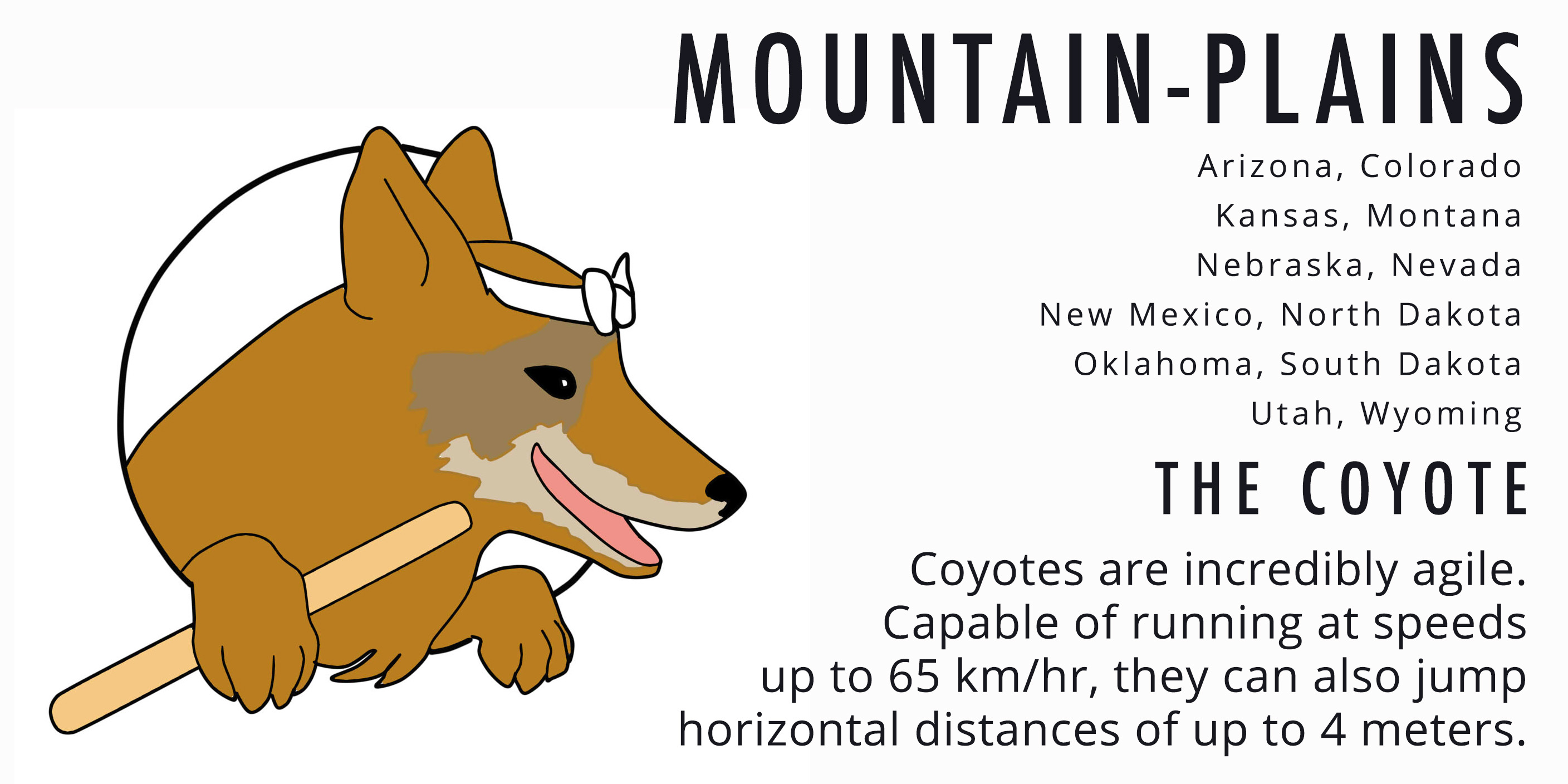Mountain Plains Coyote Card