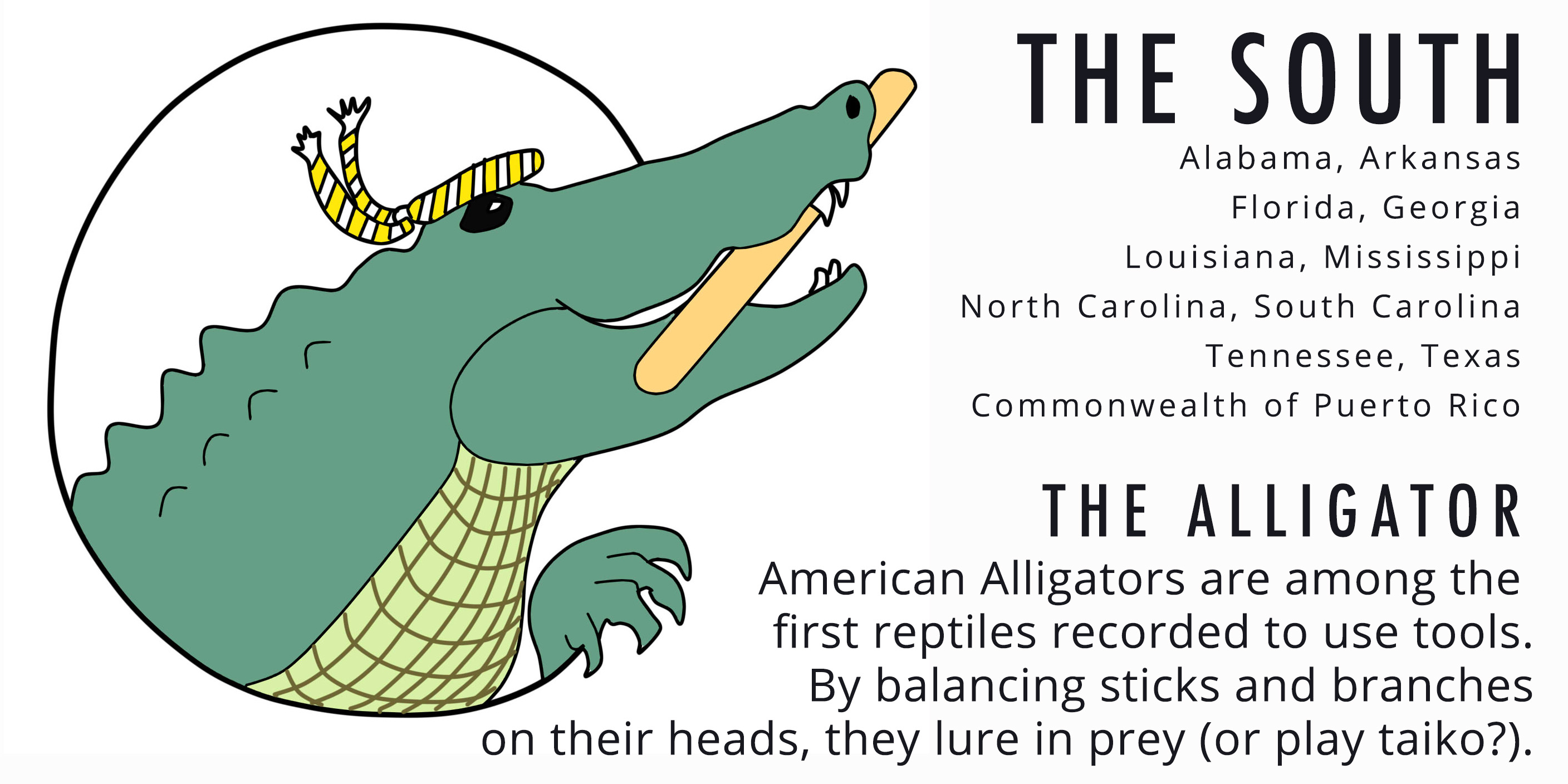 South Alligator Card